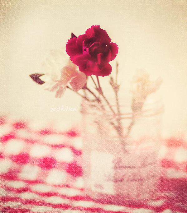 Carnations by zestkitten