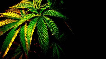 Cannabis HD Wallpaper by NEWShoah