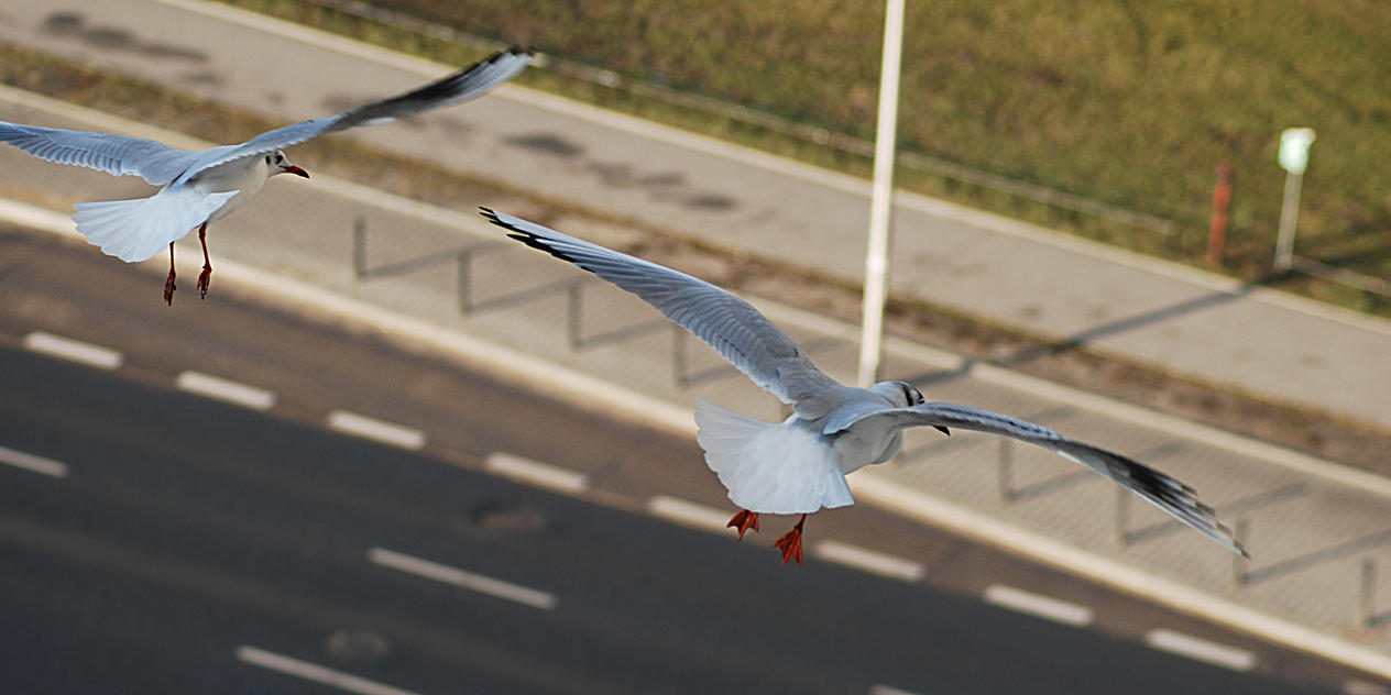 Seagulls by NEWShoah
