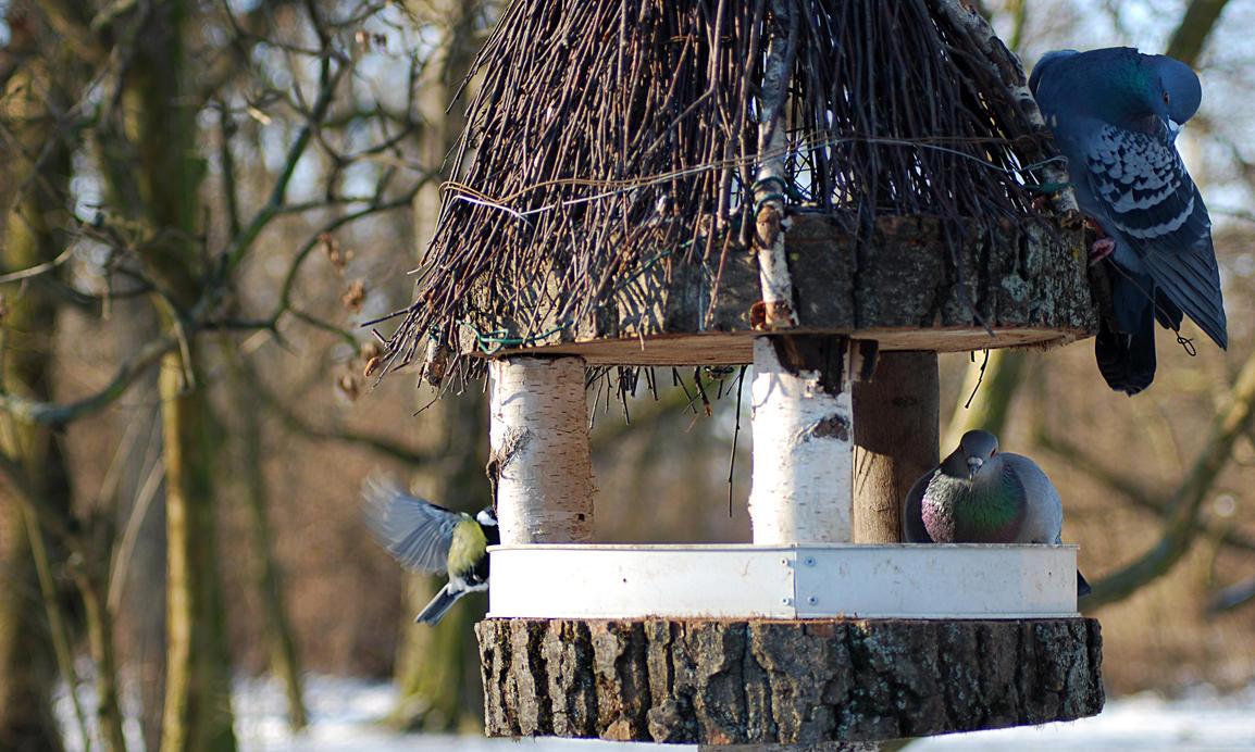 The Bird Feeder by NEWShoah