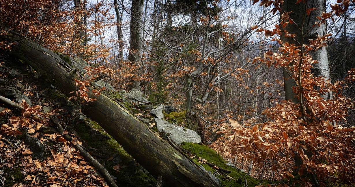 The deep deep forest ... by NEWShoah