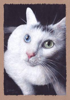 Cat 1 highres