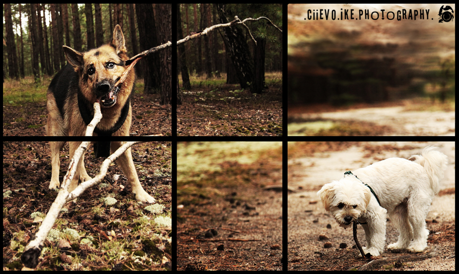 ::Xena + Lizzy:: by Ciievo