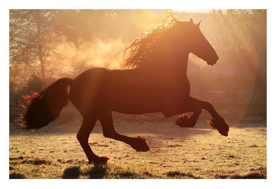 Autumn Sun by Ponytail