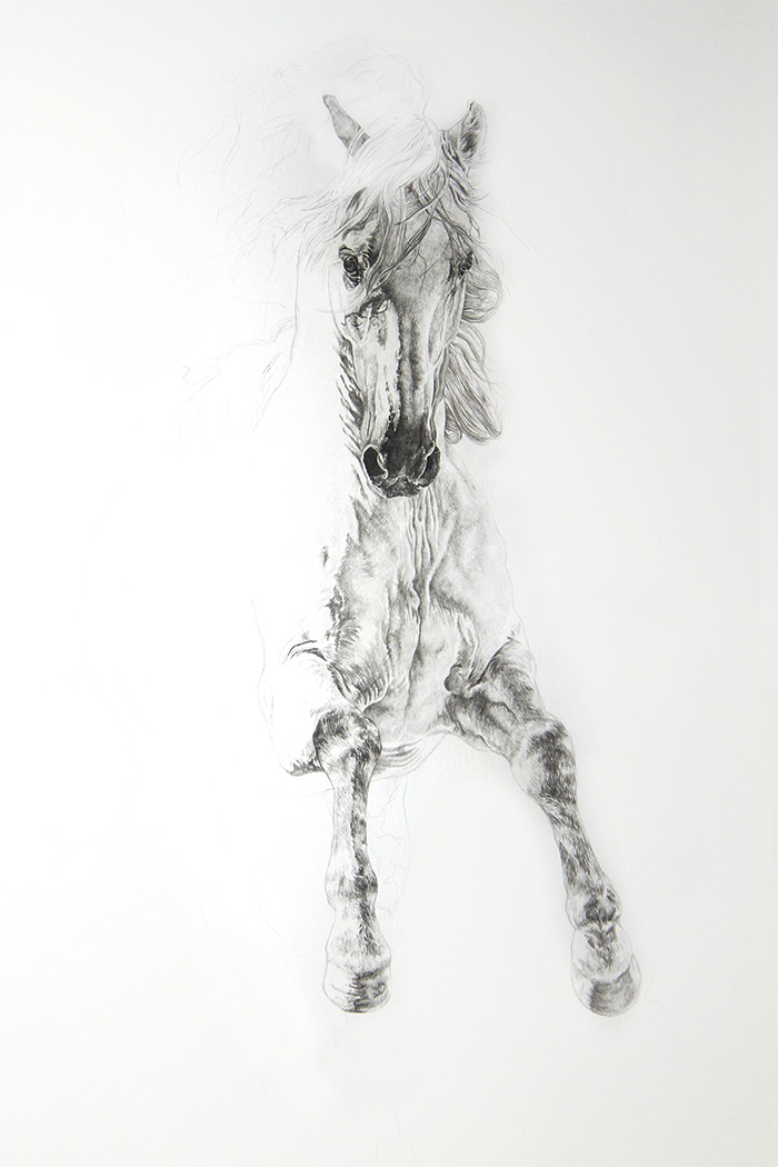 Zingaro by Ponytail