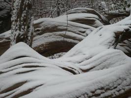 Cedar Lines by SylvanSmith