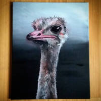 Ostrich by Rosepuggle