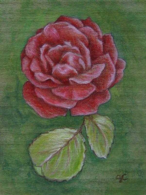 Rose Miniature by johannachambers