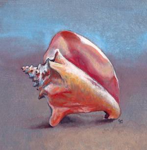 Seashell Miniature