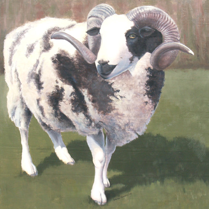 Rambo the Sheep by johannachambers