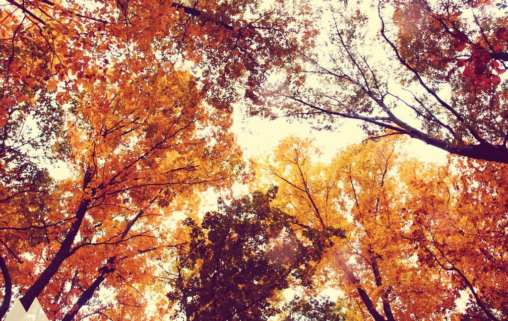 Canopy of last days of Autumn by BelovedImmortal