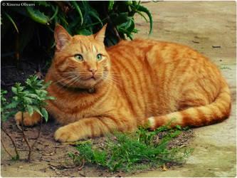 Jeshu, my cat 2 by pequechip