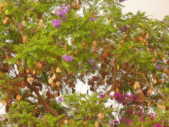 Encuentre al picaflor / Find the hummingbird by pequechip