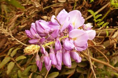 Flor de la pluma by pequechip