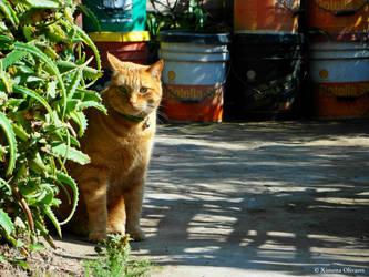 Jeshu, my cat 3 by pequechip