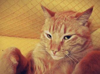 Jeshu, my cat 4 by pequechip