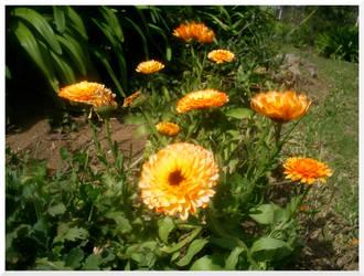 The Garden IV