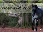 Inspiration Graphic