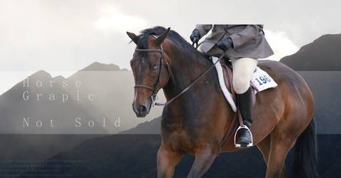 Equinox Horse Graphic