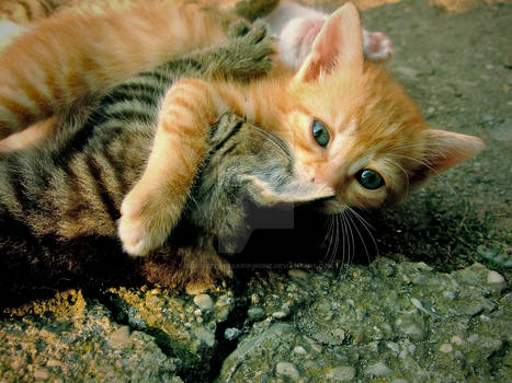 Kitty Affection