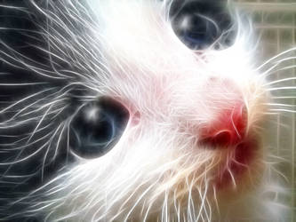 Fractal Cat by oNezzzART