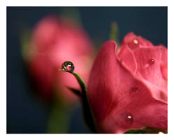 blush by RibbonBlack