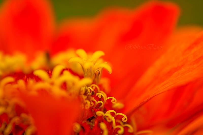 Svirnebl hive