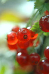 berry berry me
