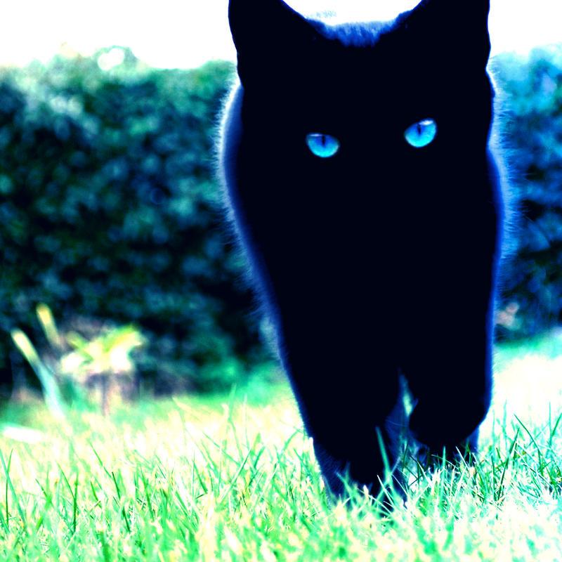 Ravenheart of WhisperClan Blue_eyes_3_by_planet37-d3h6l49