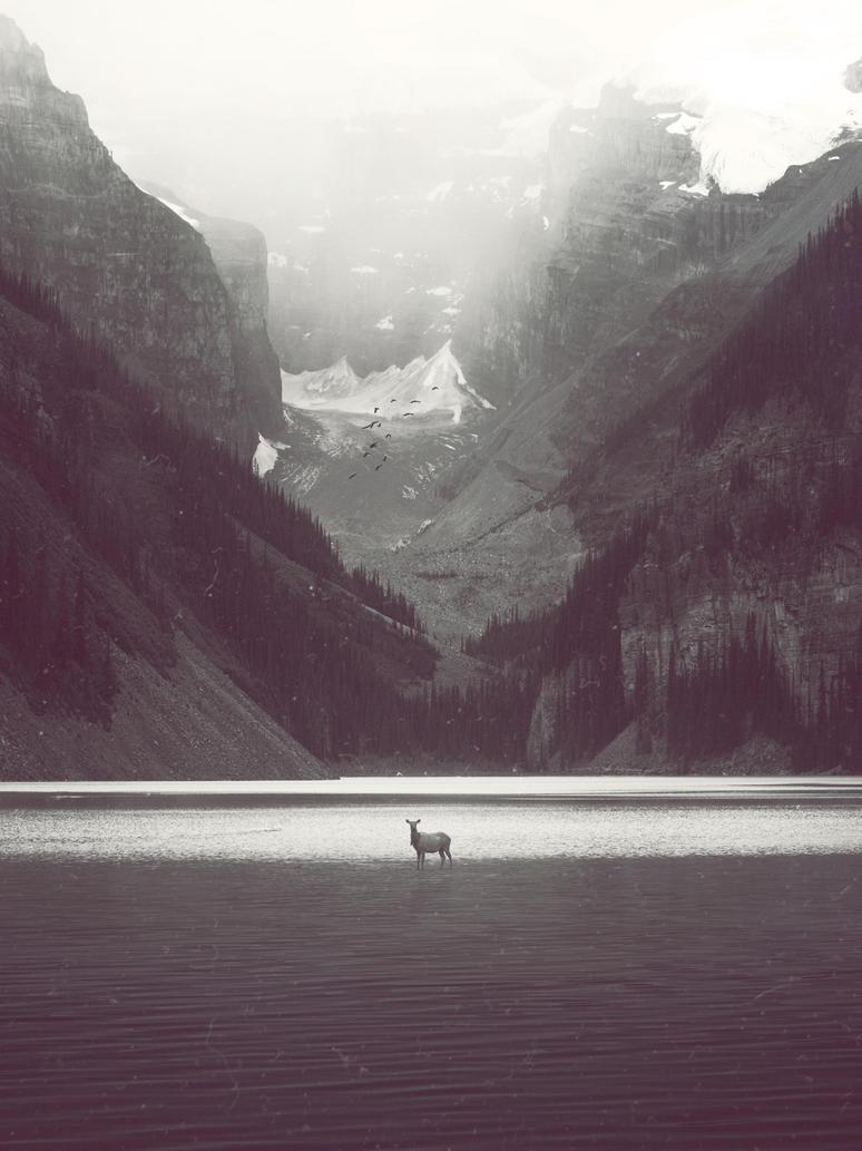 Elk by Planet37