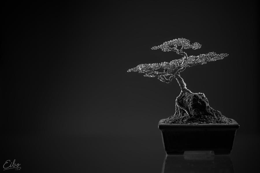 Bonsai 1 by Eibography