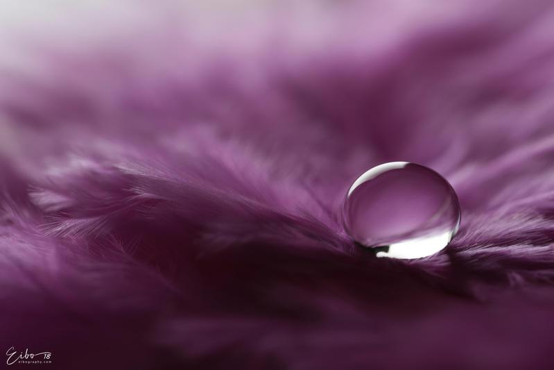 Purple by Eibography