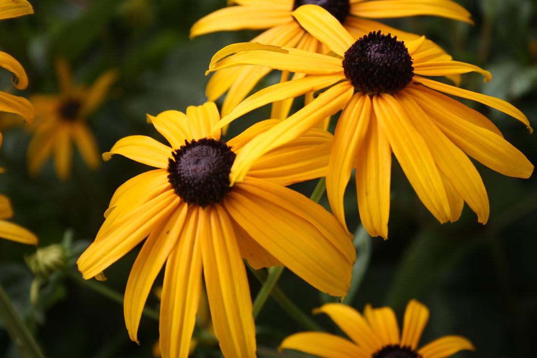 Pretty flowers high quality by lego3 on deviantart pretty flowers high quality by lego3 mightylinksfo
