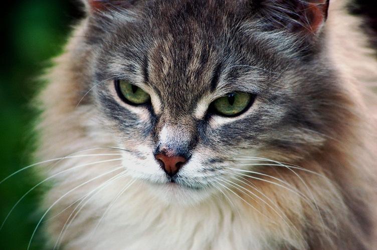 Cat6 by NRichey