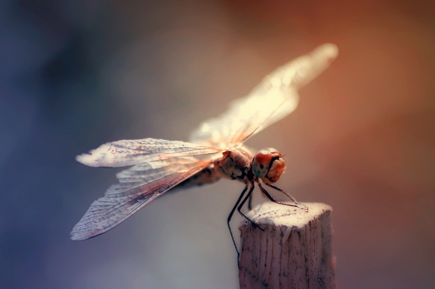 Dragonfly21 by NRichey