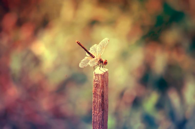 Dragonfly23 by NRichey
