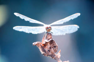 Dragonfly24 by NRichey