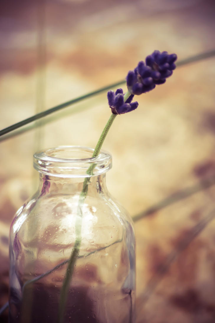 Lavender in a bottle by NRichey