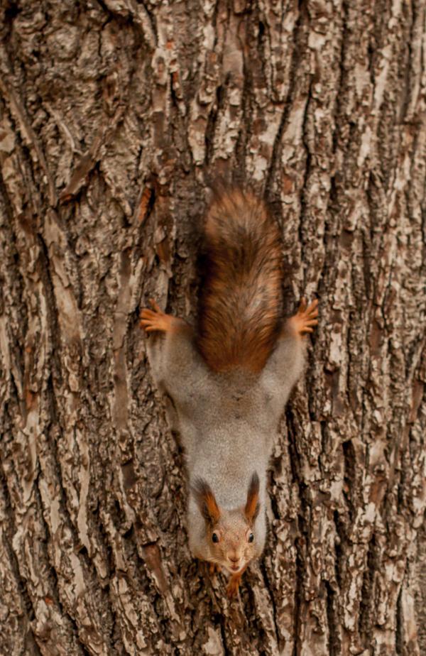 Squirrel4 by NRichey