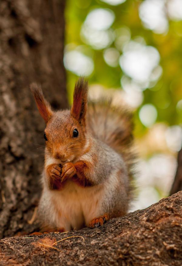 Squirrel5 by NRichey