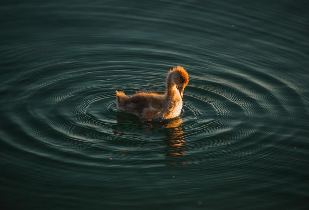 baby duck by mundo-de-suenos