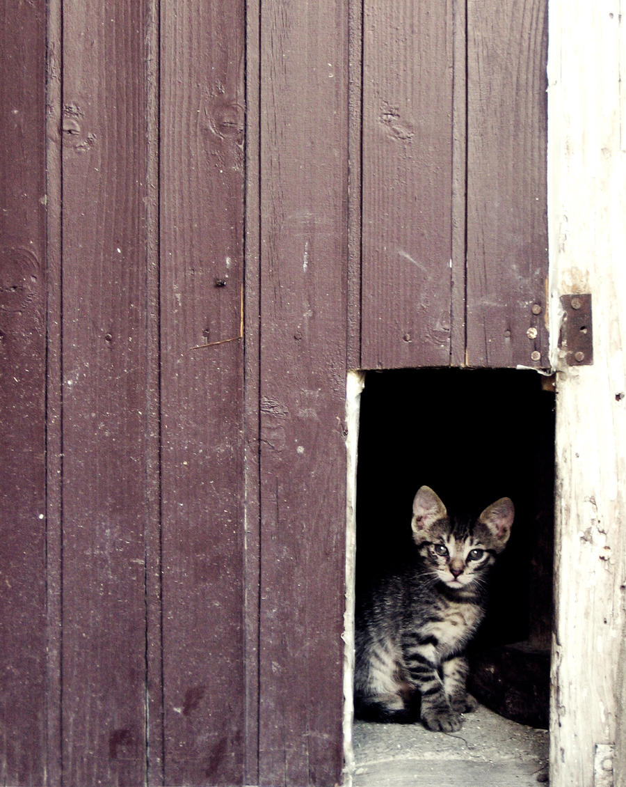 Behind the doors by Poof2507