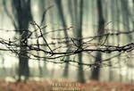 wild One by fraukatie