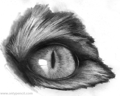 Realistic Cat Eyes Tutorial by chandito