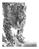 Amur Leopard by chandito