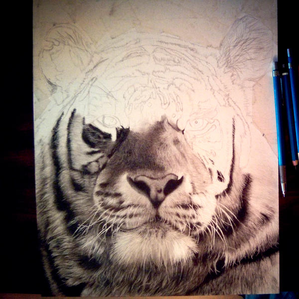 Tiger - Work In Progress by chandito