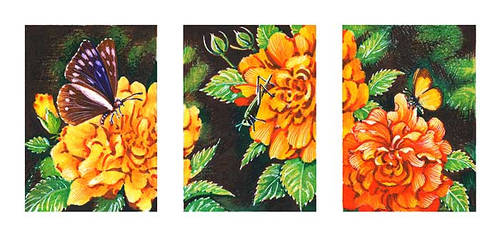 Insect Triptych ACEO