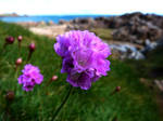 Thrift On The Shore