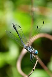 Palmfly by Temujinsword