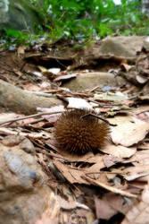 Jungle Spikes by Temujinsword